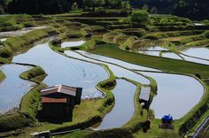 写真: 水の張られた棚田