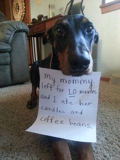 I love Dobies!!
