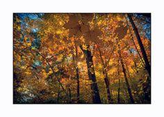 Fall in full colour