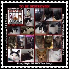 Help us Save NYC AC&C Shelter Cats.  These kitty babies need a home for Christmas. Can u helP?