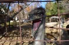 Smile!  Rancho Las Lomas Wildlife Foundation