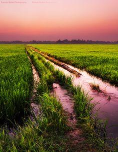 Kerala Rice Fields Sunset by Romain Matteï Photography on 500px