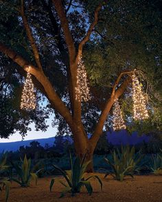 Hanging Tree Lighting (DIY with tomato cages!) I think these could be grouped, turned upside down ... ???????