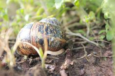 1 little snail