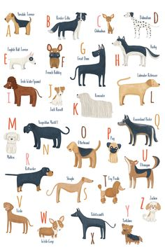 """If you and your family are Dog Lovers like mine, this Alphabet is for you. An alphabet of dogs inspired by all the diversity of different breeds.. Printed in Museum-quality poster made on thick and long-lasting semi-glossy (silk) paper. Paper weight: 200 gsm / 80 lb ** PRINT SIZES AVAILABLE ** 11""""x14"""" 12""""x16"""" 16""""x20"""" 18x24"""" A4 - 21x29'7 cm A3 - 29,7x42 cm A2 - 42x59,4 cm 50x70 cm Larger or Smaller sizes also available. Alphabet Wall Art, Alphabet Print, I Love Winter, Scandinavian Art, Love Drawings, Basset Hound, New Print, Poster Making, Dalmatian"""