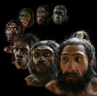 Reconstructions of our hominid ancestors and early humans created by John Gurche that now reside in the Smithsonian's Hall of Human Origins.
