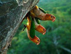 Amazonia - Brasil