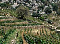 LORSQUE LES FRANÇAIS EXPORTENT LE VIN À L'ÉTRANGER A l'instar d'un Moët Hennessy en Chine, des viticulteurs français exploitent en terre étrangère leur savoir-faire. Tour d'horizon de ces nectars multiculturels.