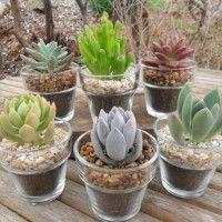 piante-grasse-