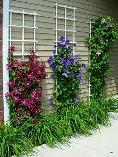 FB POST Gorgeous Clematis! ✿✿✿ {source: www.perennialgardens.biz}