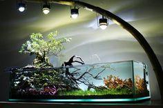 10 Tips on Designing a Freshwater Nature Aquarium Biotope Aquarium, Aquarium Garden, Aquarium Landscape, Nature Aquarium, Home Aquarium, Aquarium Design, Aquarium Fish Tank, Planted Aquarium, Aquascaping