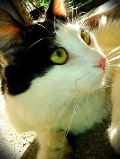 Luz felina