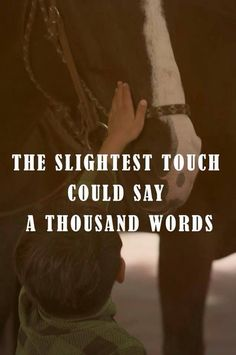 """The slighest touch could say a thousand words"" #equestrian #horse #equine…"