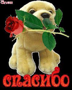 Beautiful Day, Good Morning, Dinosaur Stuffed Animal, Thankful, Teddy Bear, Christmas Ornaments, Holiday Decor, Memes, Gifts