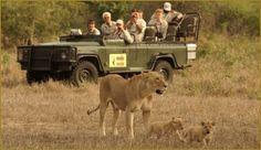 Kruger National Park, South Africa - Safari, the Big Five, Amarula, a trip of a lifetime! Adventure Company, Adventure Tours, Safari Adventure, Adventure Travel, Out Of Africa, East Africa, South Africa Safari, Tanzania Safari, Best Travel Sites