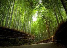 Free kyoto arashiyama japan Wallpaper - Download The Free kyoto arashiyama japan Wallpaper - Download Free Screensavers, Free Wallpapers, Send Free eCards and Play and Download Free Games - ScenicReflections.com