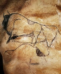 Chauvet Cave Paintings Gallery The bison, dated at 30,340 +/- 570 BP, is drawn in black, and its highly systematic representation is repeated for the other bisons in the Chauvet Cave, with its arched lines, accentuated features and small round eyes. The bison is part of the Bison Panel, with two other bison and an engraving of a partial mammoth. This engraving, along with several others, was made before the black drawings.