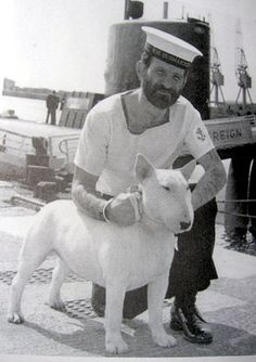 Bull Terrier and sailor, vintage photo, black and white, i need a little bully of my own