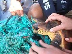 Resgate tartaruga Wild Life, Good People, Animal Rescue, Science, Youtube, Blue, Animals, Wood, Animales
