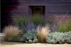 Love this combo and more so against this dark wall. Looks like artemisia, Russian sage, verbena b, nassella tunuissima and miscanthus sinensis gracillimus. Farmhouse Landscaping, Modern Landscaping, Backyard Landscaping, Landscaping Software, Landscaping With Grasses, Backyard Ideas, California Front Yard Landscaping Ideas, Southern Landscaping, Landscaping Equipment