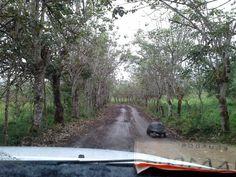 Черепахи на Галапагосах мешают движению автомобилей