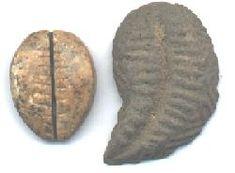 Ancient Chinese seashell money