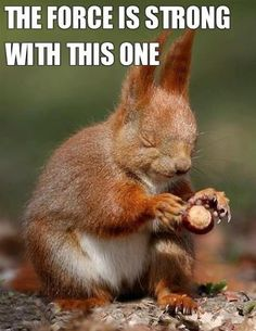 Squirrel force