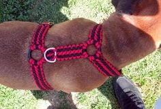 Paracord Dog or Cat Harness - here is where you can find that Perfect Gift for Friends and Family Members