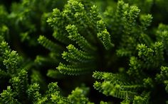 awesome green plant awesome nature photography wallpaper hd