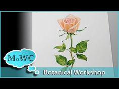 Strathmore Artist Workshop – Rose Botanical Part 1 - YouTube