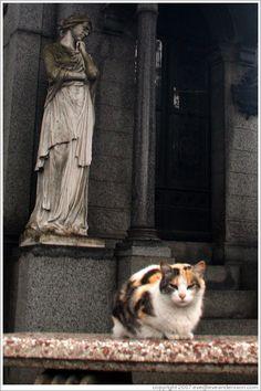 Cat at La Recoleta Cemetery.