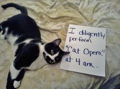 The best of cat shaming – Part 3