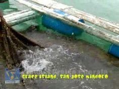 Video clips and photos from our trip to Grace Island. Mindoro, Heavenly Places, Urban Life, Island Resort, In This Moment