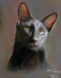 New Dawn oriental shorthair female Painted by hand with Corel Painter