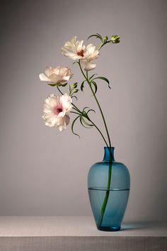 Beautiful Rose Flowers, Exotic Flowers, Amazing Flowers, Beautiful Flowers, Ikebana Flower Arrangement, Flower Vases, Floral Arrangements, Flower Background Wallpaper, Flower Backgrounds