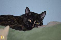 Marmalade Kitty