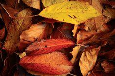 Autumn by FelipeZarateSimon Beautiful Photos Of Nature, Nature Photos, Nature Photography, Autumn, Landscape, Natural, Fotografia, Scenery, Fall Season