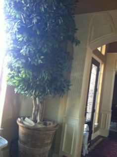 Ficus tree 12 ft tree w huge ceramic pot in white house s garage sale