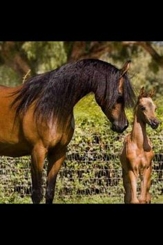 The ethereal Pianissima and her foal Pia by Ganges. Bred and owned by Janow Podlaski Stud, Poland. (Photo credit - iequine)