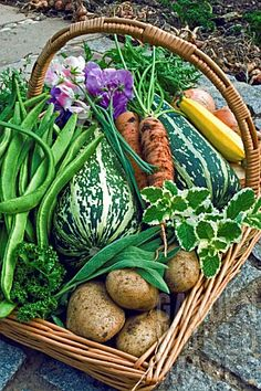 SW1269- BASKET OF ORGANIC VEGETABLES AND HERBS : Asset Details -Garden World Images
