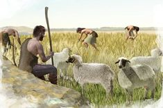 How the plough made the modern economy possible - BBC News Ancient Rome, Ancient History, Bbc World Service, Hunter Gatherer, Image Caption, Bronze Age, Priest, Photo Library, Animals