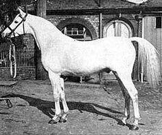 Skowronek, 1909