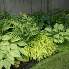 Side yard planting options. landscape by Glenna Partridge Garden Design