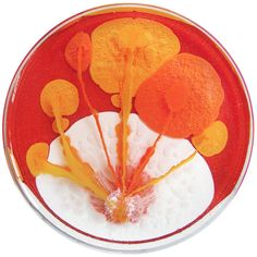 Abstract petri dish paintings by Klari Reis (http://www.klarireis.com)