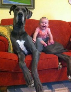 if the dog is bigger than me i won't go near it