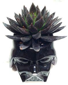 I especially like the Darth Vadar mug with black succulent