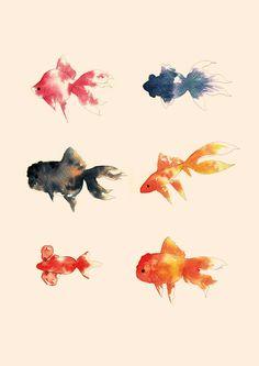 金魚 Azki's Illustrations 琉金、出目金、青文魚、 コメット、水泡眼、オランダ獅子頭