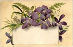 Violets Flower Label - The Graphics Fairy