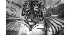 Pencil Drawings » Welcome to OnlyPencil.com » Lisandro Pena Gifts, Prints and Original Artwork - Part 1