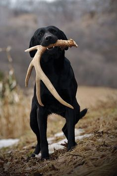 Shed Hunting Dogs